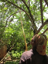 Comunidades del Lago Tana, reclectando limones