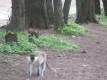 Monos en el parque nacional de Hawassa