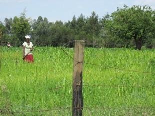 Trabajadoras rurales en Nakuru, Kenia