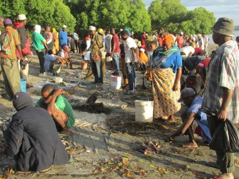Los vendedores de pescado en Tanga