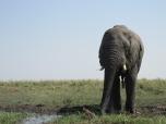 "Safari en el ""Chobe National Patk"", Botswana"