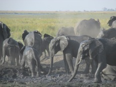 "Safari en el ""Chobe National Patk"", Botswana"