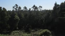 Bosques cerca de Knysna