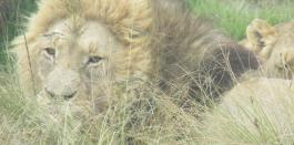 Los reyes de la fauna sudafricana