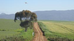 Campos cerca de Caledon