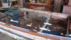 Los cangrejos gigantes que se encuentran en Hakodate