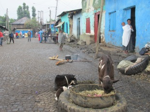Postal de la vida cotidiana en Gondar, al norte de Etopía.