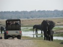 """Al norte de Botsuana llegan miles de turistas de todo el mundo para contemplar las bondades del Parque Nacional Chobe y las decenas de especies de animales que allí conviven libremente. Su único límite es la propia naturaleza. Se ven elefantes, jirafas, hipopótamos, búfalos, varias especies de antílopes, cocodrilos, ciervos, monos, zorros, iguanas, y aves de todo tipo y color. Los leones aparecen de vez en cuando, en horarios nocturnos, de día reposan a la sombra. Es difícil de describir la sensación de ver estas criaturas en su hábitat natural, libres, corriendo, bañándose, cazando, confraternizando… A veces parece un poco intrusiva la cercanía de los turistas, pero es uno de los parques que más respeta el hábitat de los animales, ya que no hay ningún tipo de cercas y los guías no portan armas. Cada uno tiene su espacio allí, hombre y animales. Todos tienen su ámbito y eso es lo lindo, el gran territorio de Botsuana lo permite. Cada safari parece un metáfora de algo mayor, de un debate milenario: el hombre, con sus avances y su desarrollo, acercándose a lo opuesto, aproximándose y maravillándose por la antítesis, por esa naturaleza pura, sin tiempo, donde el devenir discurre pero en otra dirección, la del ciclo de la vida, no la del """"progreso"""". Quizá deberíamos cambiar de dirección o al menos repensarla. La riqueza de África también se aprecia en su flora y su fauna, únicas en el mundo."""