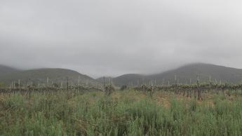 """Viñedos cerca de la pequeña ciudad de Swellendam. Los vinos sudafricanos son reconocidos a nivel mundial, sobre todo la cepa """"Pinotage"""", única en el mundo."""