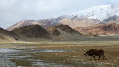 Del desierto de Gobi a las montañas Altai. Tramo Gurvantes-Ulgii.